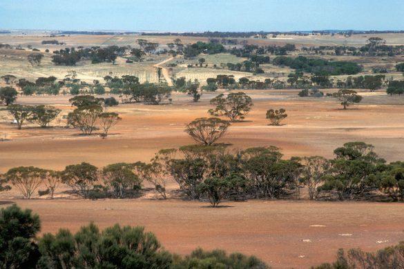 Bruce Rock in the Western Australian wheat belt.