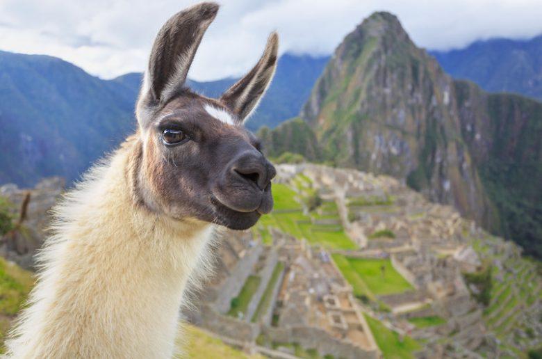 Meet a cutie in Peru