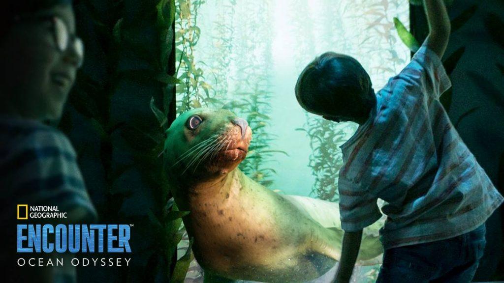 Nat Geo Ocean Odyssey seal